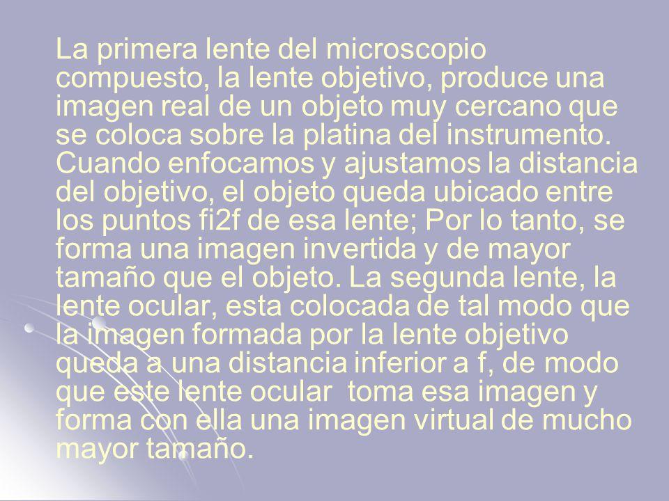 La primera lente del microscopio compuesto, la lente objetivo, produce una imagen real de un objeto muy cercano que se coloca sobre la platina del ins