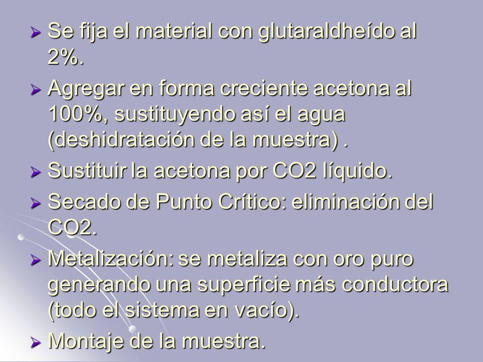 Se fija el material con glutaraldheído al 2%. Se fija el material con glutaraldheído al 2%. Agregar en forma creciente acetona al 100%, sustituyendo a