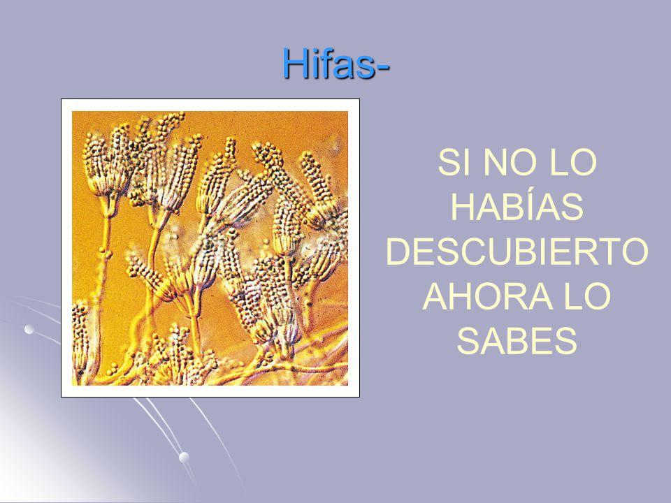 Hifas- SI NO LO HABÍAS DESCUBIERTO AHORA LO SABES