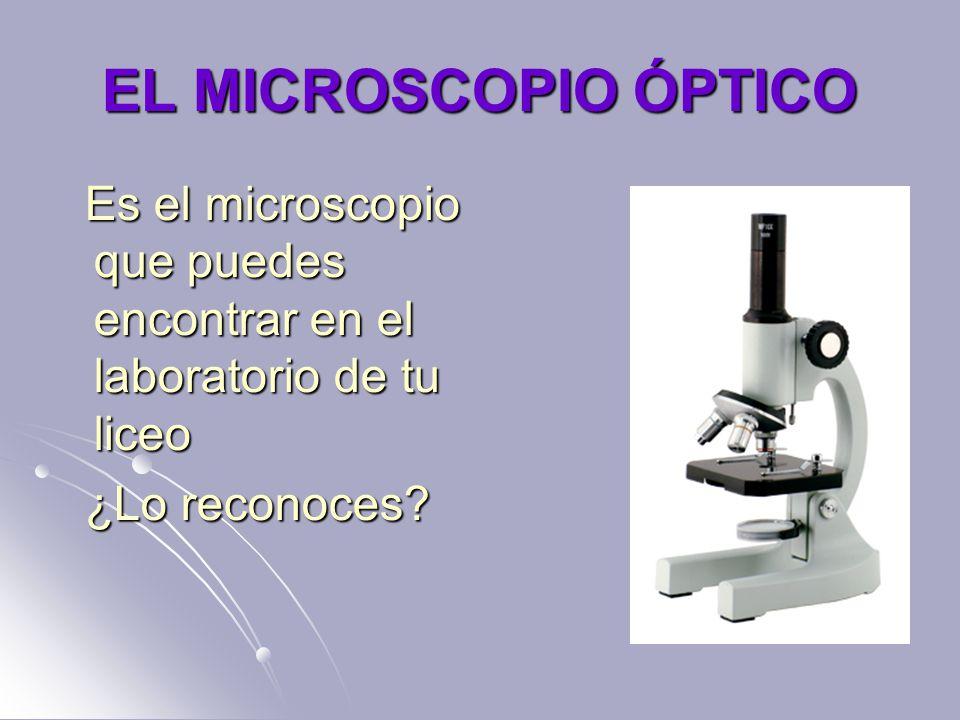 EL MICROSCOPIO ÓPTICO Es el microscopio que puedes encontrar en el laboratorio de tu liceo Es el microscopio que puedes encontrar en el laboratorio de tu liceo ¿Lo reconoces.