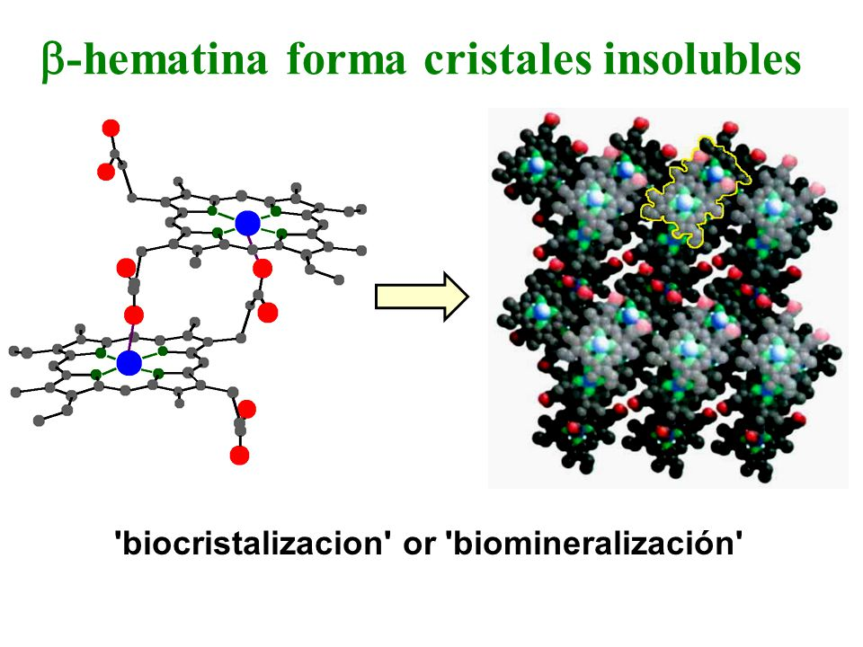 -hematina forma cristales insolubles biocristalizacion or biomineralización