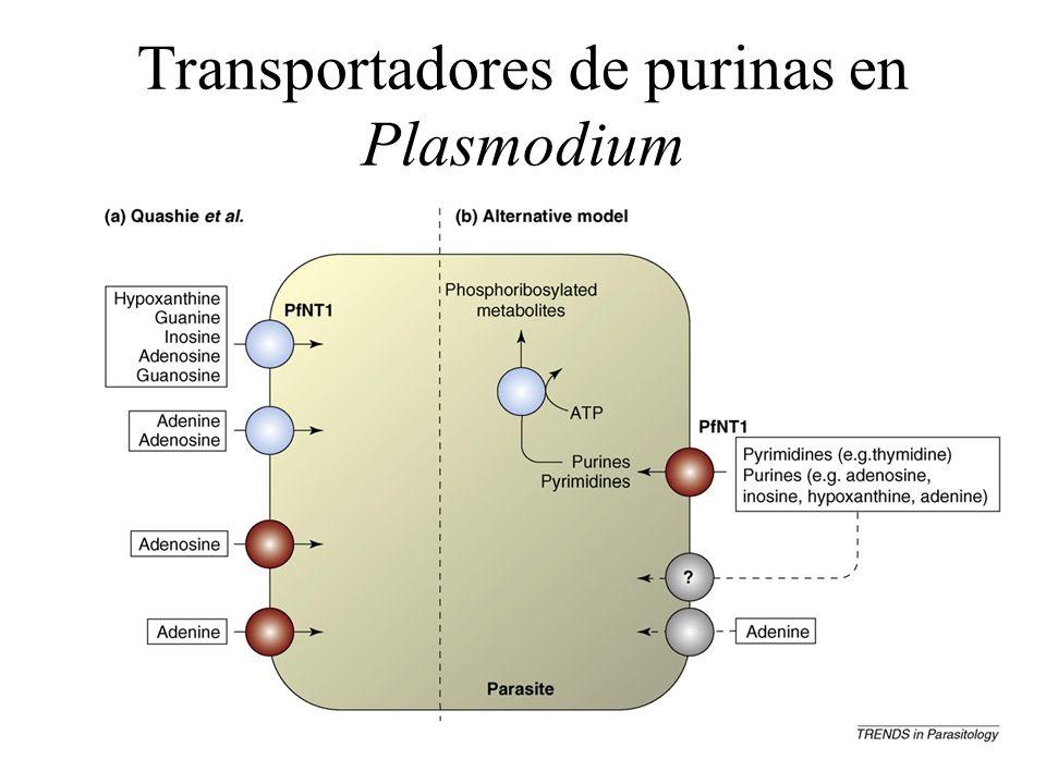 Transportadores de purinas en Plasmodium