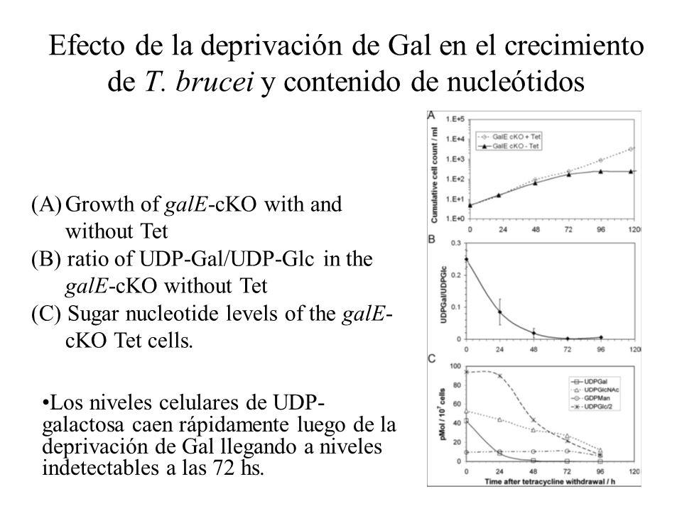 Efecto de la deprivación de Gal en el crecimiento de T.