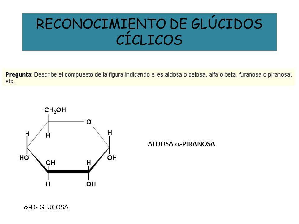 RECONOCIMIENTO DE GLÚCIDOS CÍCLICOS ALDOSA -PIRANOSA -D- GLUCOSA