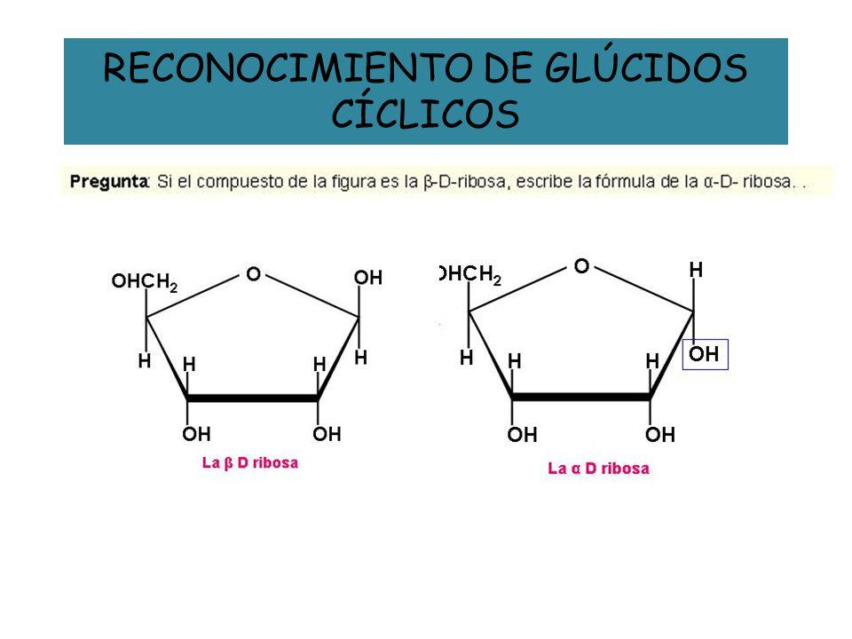 RECONOCIMIENTO DE GLÚCIDOS CÍCLICOS
