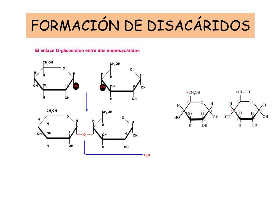 FORMACIÓN DE DISACÁRIDOS
