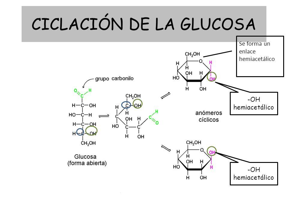 CICLACIÓN DE LA GLUCOSA Se forma un enlace hemiacetálico -OH hemiacetálico