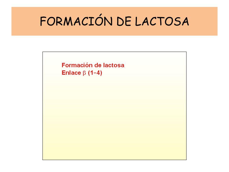 FORMACIÓN DE LACTOSA