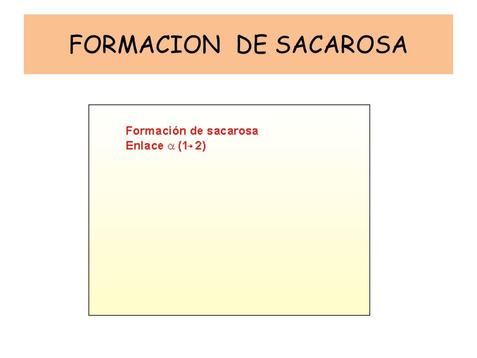 FORMACION DE SACAROSA