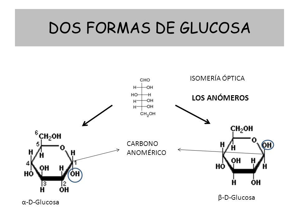DOS FORMAS DE GLUCOSA α-D-Glucosa β-D-Glucosa ISOMERÍA ÓPTICA LOS ANÓMEROS CARBONO ANOMÉRICO