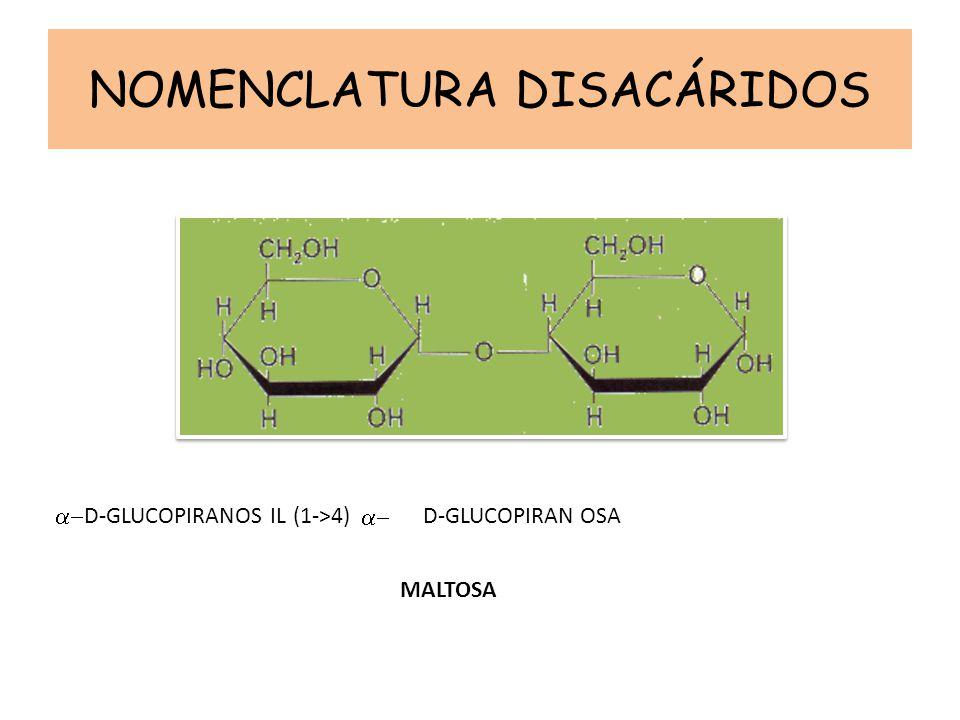 NOMENCLATURA DISACÁRIDOS D-GLUCOPIRANOS D -GLUCOPIRAN (1->4) IL OSA MALTOSA