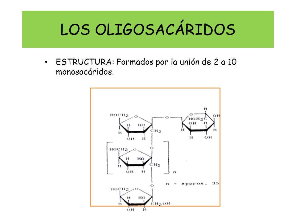 LOS OLIGOSACÁRIDOS ESTRUCTURA: Formados por la unión de 2 a 10 monosacáridos.