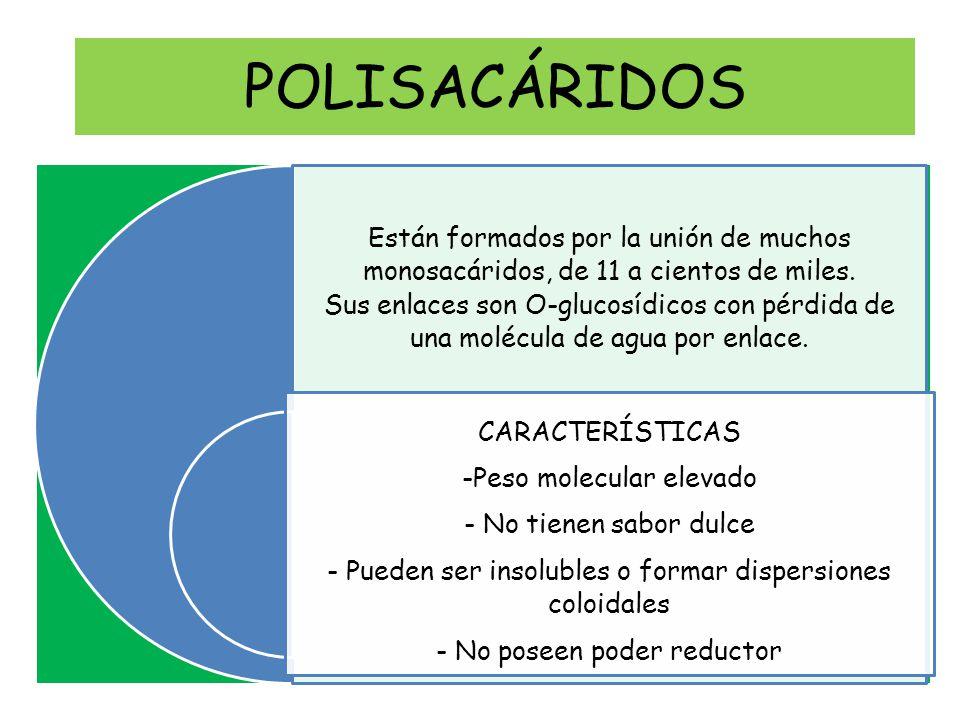 POLISACÁRIDOS Están formados por la unión de muchos monosacáridos, de 11 a cientos de miles.