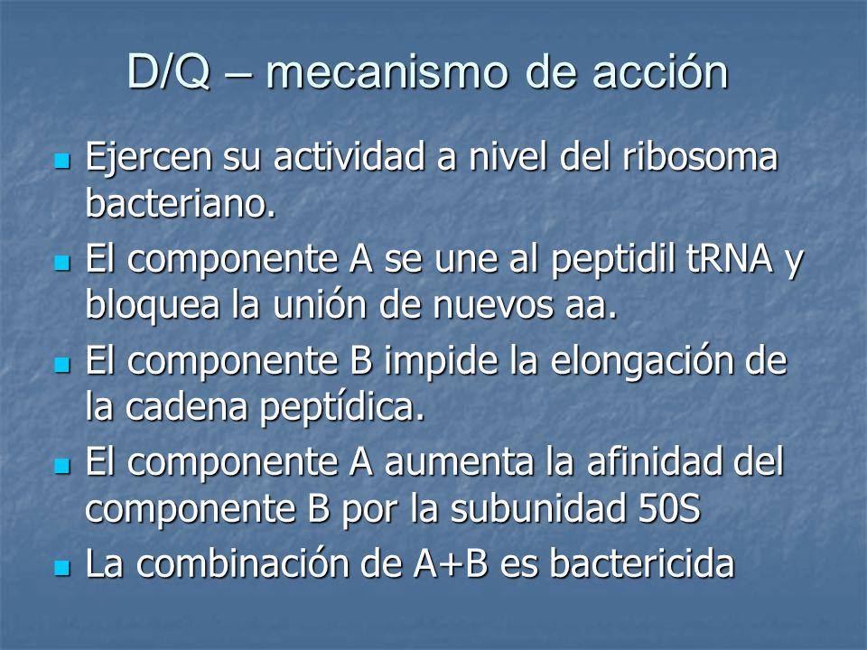 D/Q – mecanismo de acción Ejercen su actividad a nivel del ribosoma bacteriano. Ejercen su actividad a nivel del ribosoma bacteriano. El componente A