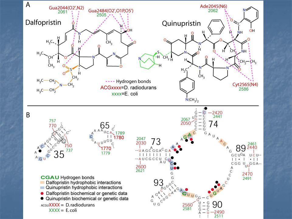 D/Q - espectro antimicrobiano La combinación es activa frente a la gran mayoría de gérmenes gram positivos (menos E.