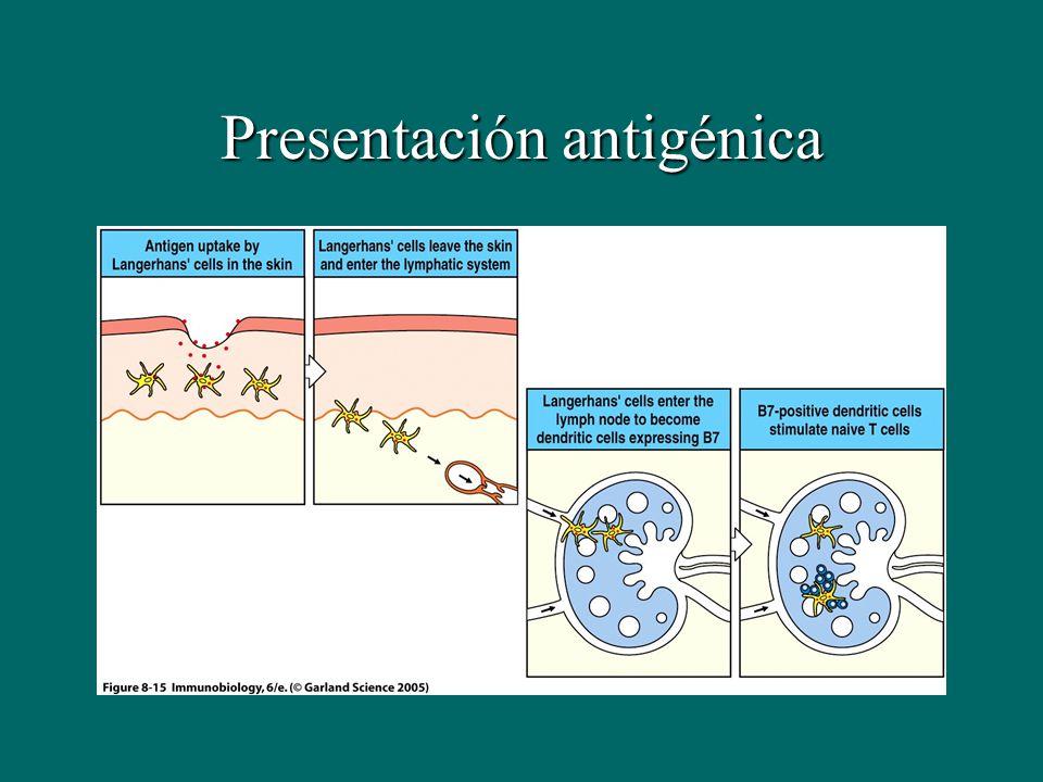 Presentación antigénica