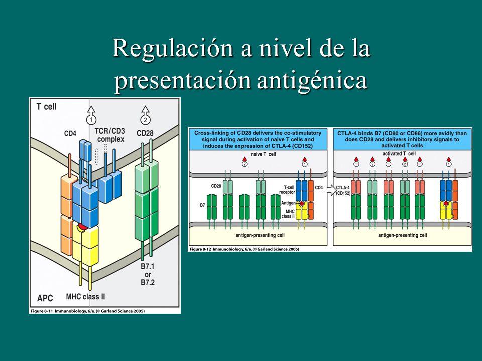 Regulación a nivel de la presentación antigénica