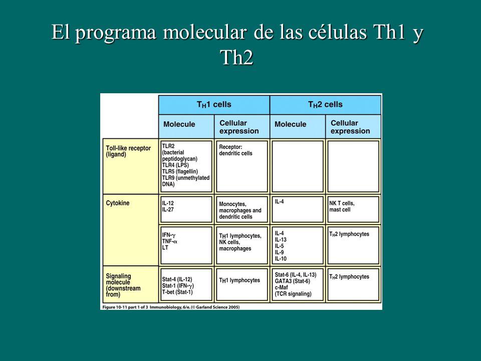 El programa molecular de las células Th1 y Th2