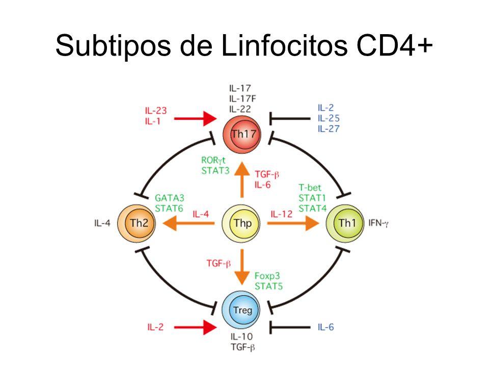 Subtipos de Linfocitos CD4+