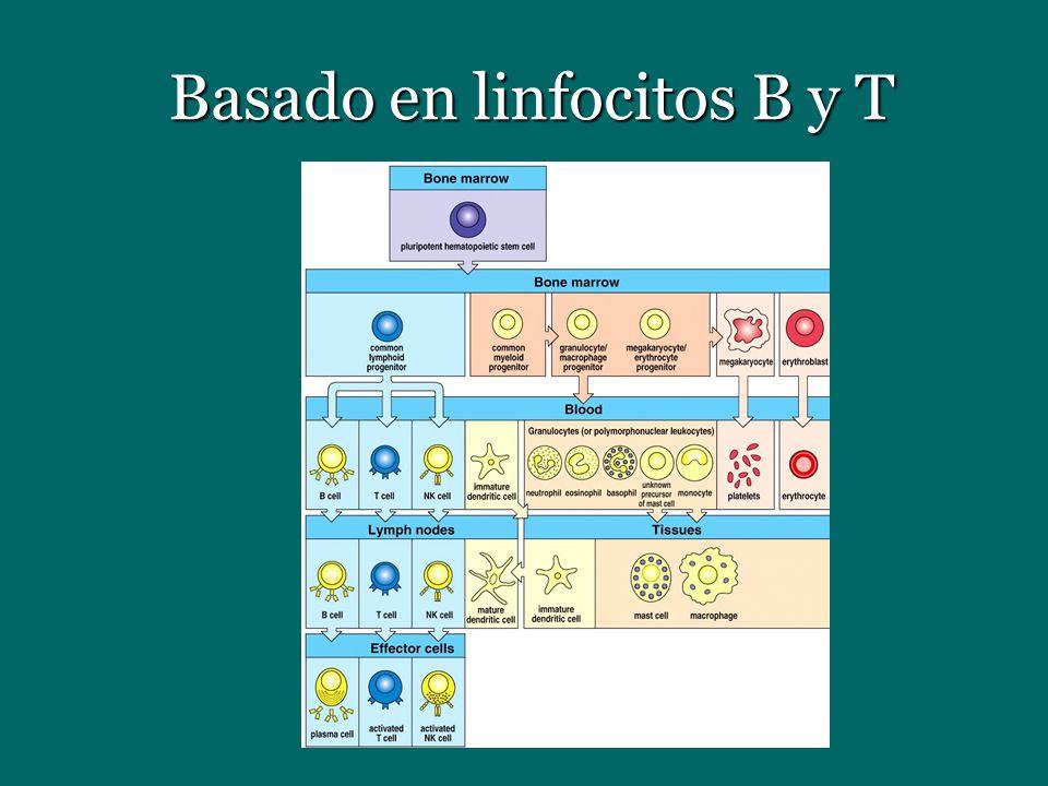 Basado en linfocitos B y T