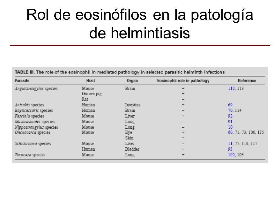Rol de eosinófilos en la patología de helmintiasis