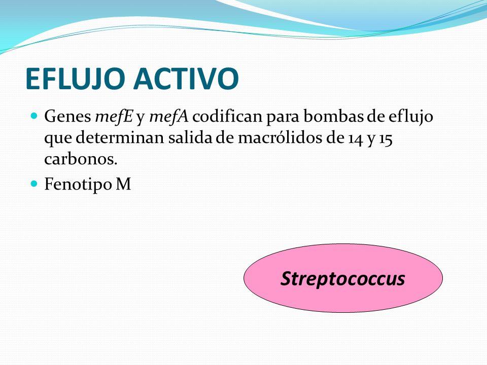 EFLUJO ACTIVO Genes mefE y mefA codifican para bombas de eflujo que determinan salida de macrólidos de 14 y 15 carbonos. Fenotipo M Streptococcus