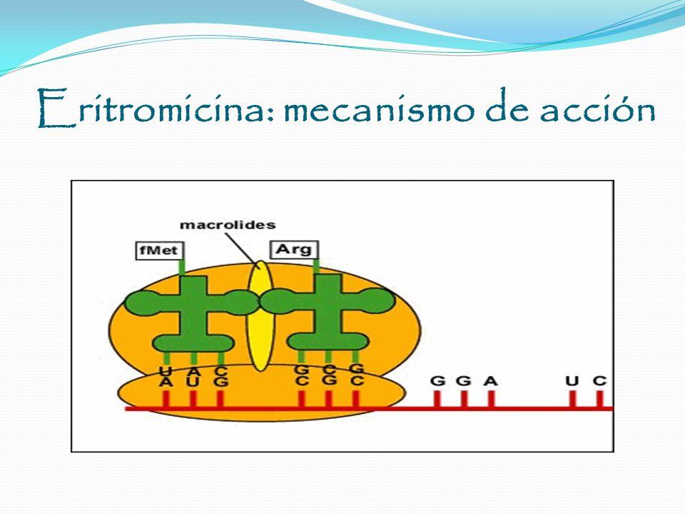 Bacteriostatico Inhibición de síntesis proteica Unión reversible al dominio del ARN ribosómico 23S de la subunidad 50S.