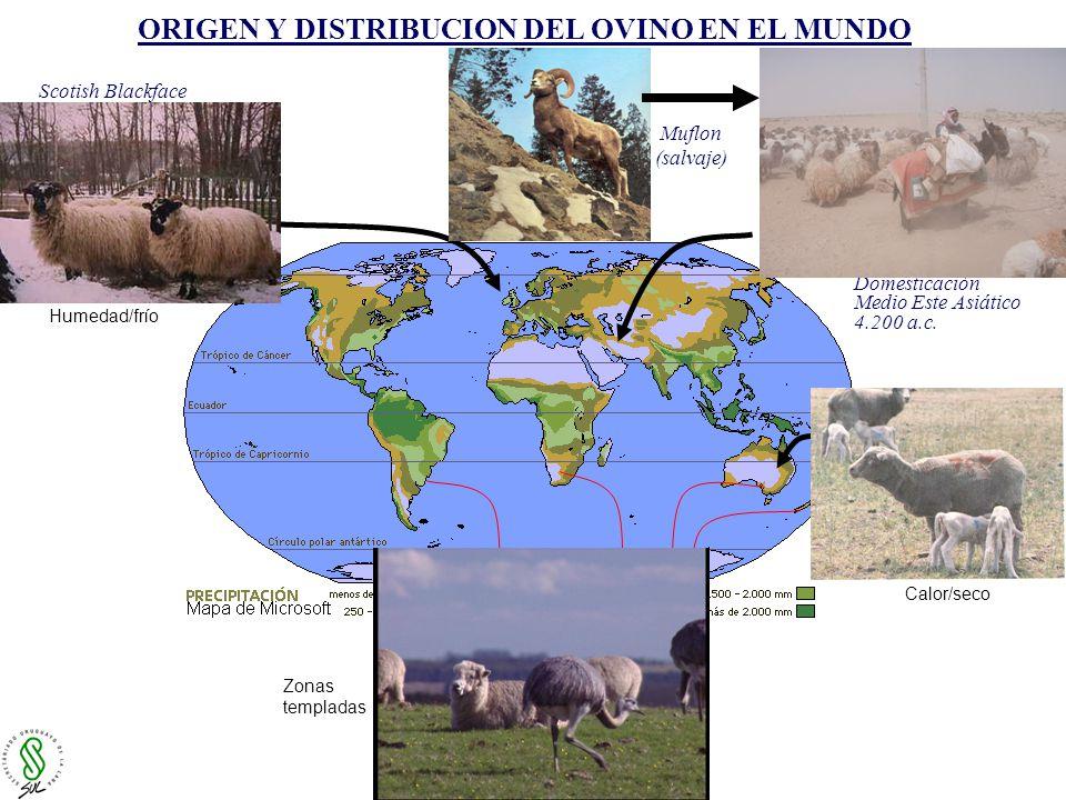 LARVA II LARVAS III CICLO BIOLOGICO DE NEMATODOS GASTROINTESTINALES METODOS DE CONTROLANTIHELMINTICOS VARIABILIDAD GENÉTICAVACUNAS NUTRICIÓN/PASTURAS (Taninos-Proteínas) MANEJO ANTIPARASITARIO (Pasturas seguras) HONGOS NEMATOFAGOS (Artrobotris-Duddingtonia) VARIACIÓN GENÉTICA PARASITARIA (Ingeniería genética) Foto: D.Castells (SUL) Foto: C.
