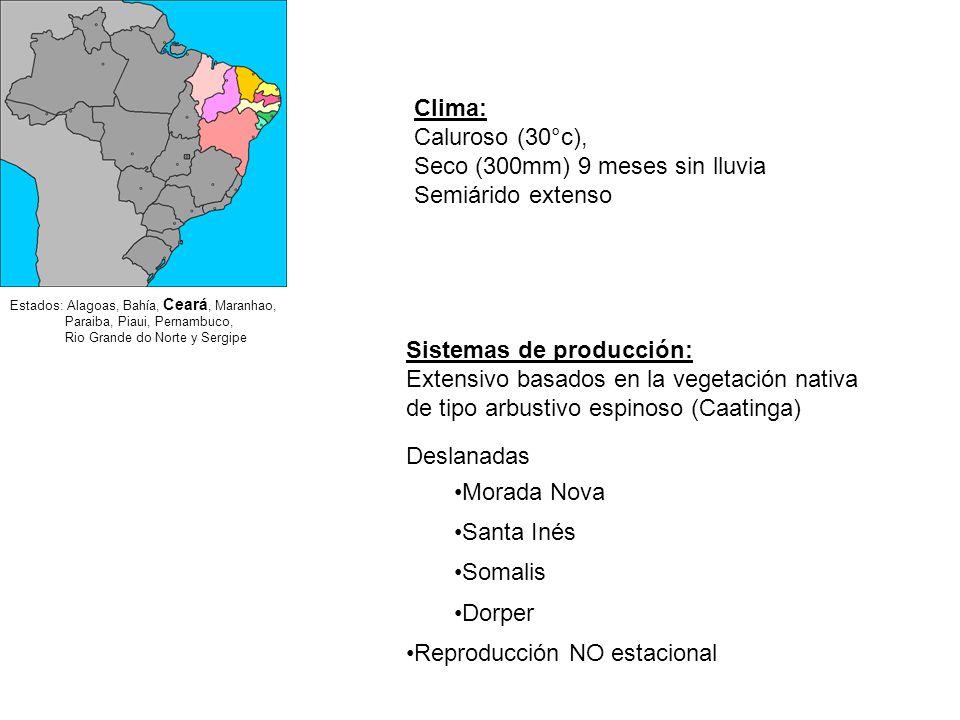 Parásitos externos: Miasis (bicheras), Piojo, Sarna Parásitos internos: Nematodos Gastrointestinales (lombrices), Saguaypé, Tenias Enfermedades Infecciosas: Clostridiosis (gangrenas), Ectima (boquera), Conjuntivitis Afecciones Podales: Footrot (Pietín), Abscesos Metabólicas: Toxemia de la Preñez Principales enfermedades de ovinos en Uruguay