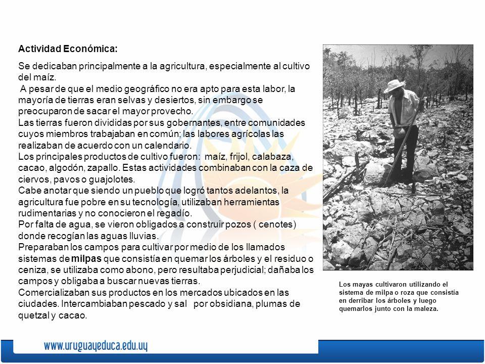 Actividad Económica: Se dedicaban principalmente a la agricultura, especialmente al cultivo del maíz. A pesar de que el medio geográfico no era apto p