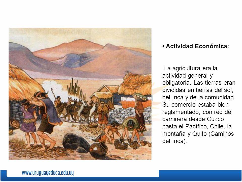 Actividad Económica: La agricultura era la actividad general y obligatoria. Las tierras eran divididas en tierras del sol, del Inca y de la comunidad.