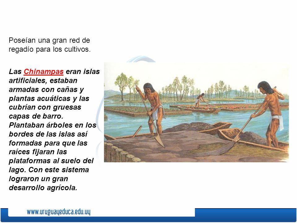 Poseían una gran red de regadío para los cultivos. Las Chinampas eran islas artificiales, estaban armadas con cañas y plantas acuáticas y las cubrían