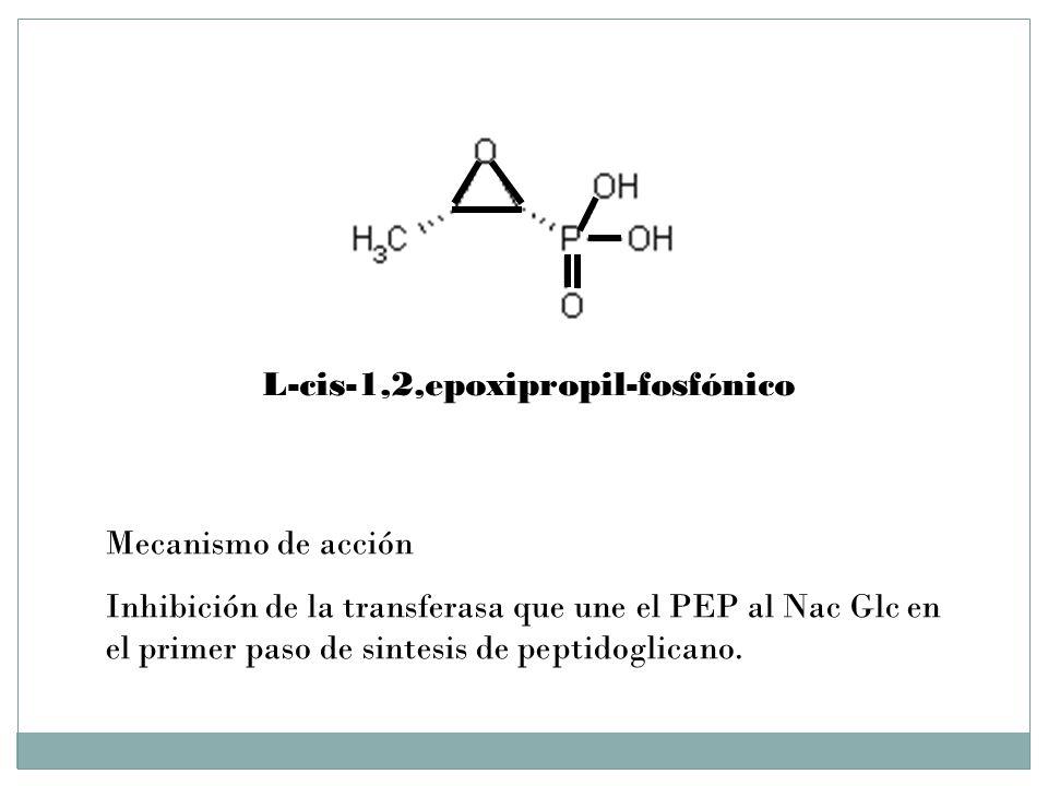 L-cis-1,2,epoxipropil-fosfónico Mecanismo de acción Inhibición de la transferasa que une el PEP al Nac Glc en el primer paso de sintesis de peptidogli