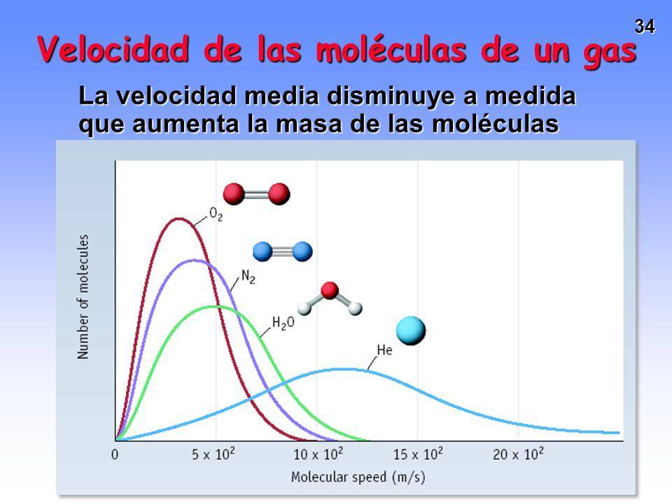 33 Velocidad de las moléculas de un gas Las moléculas de una muestra de gas presentan un rango de velocidades: