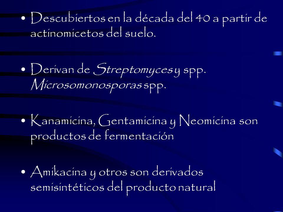 Descubiertos en la década del 40 a partir de actinomicetos del suelo.