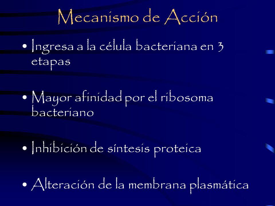 Mecanismo de Acción Ingresa a la célula bacteriana en 3 etapas Mayor afinidad por el ribosoma bacteriano Inhibición de síntesis proteica Alteración de la membrana plasmática