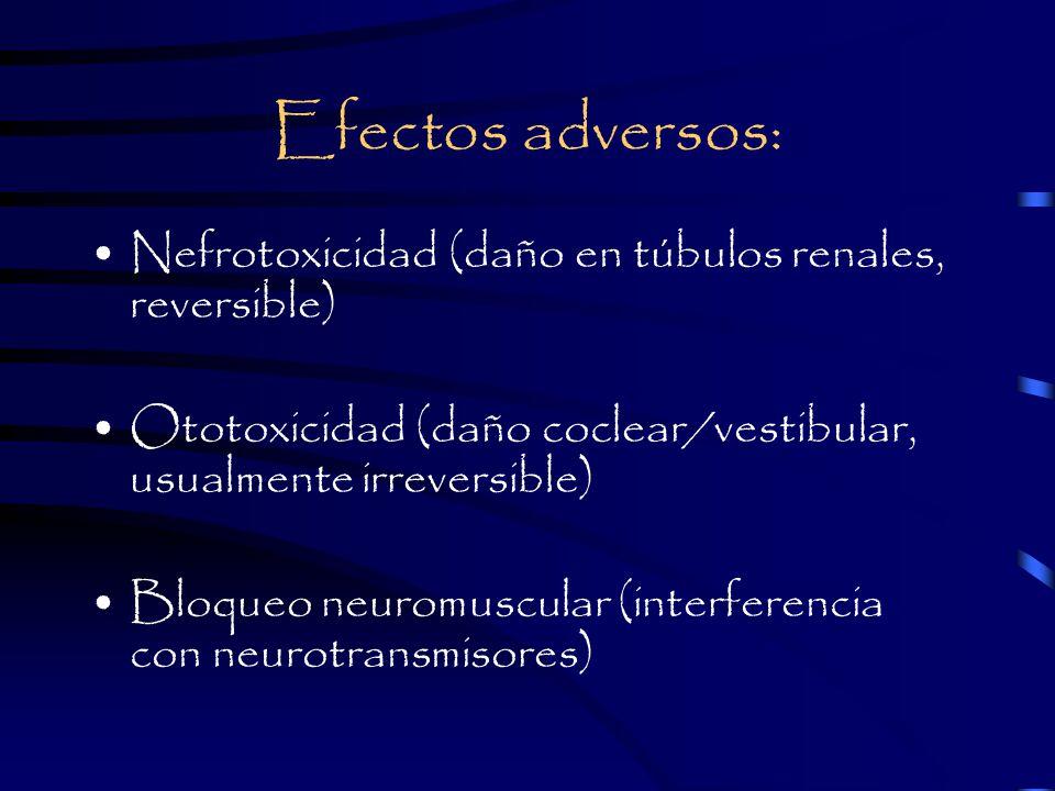 Efectos adversos: Nefrotoxicidad (daño en túbulos renales, reversible) Ototoxicidad (daño coclear/vestibular, usualmente irreversible) Bloqueo neuromuscular (interferencia con neurotransmisores)