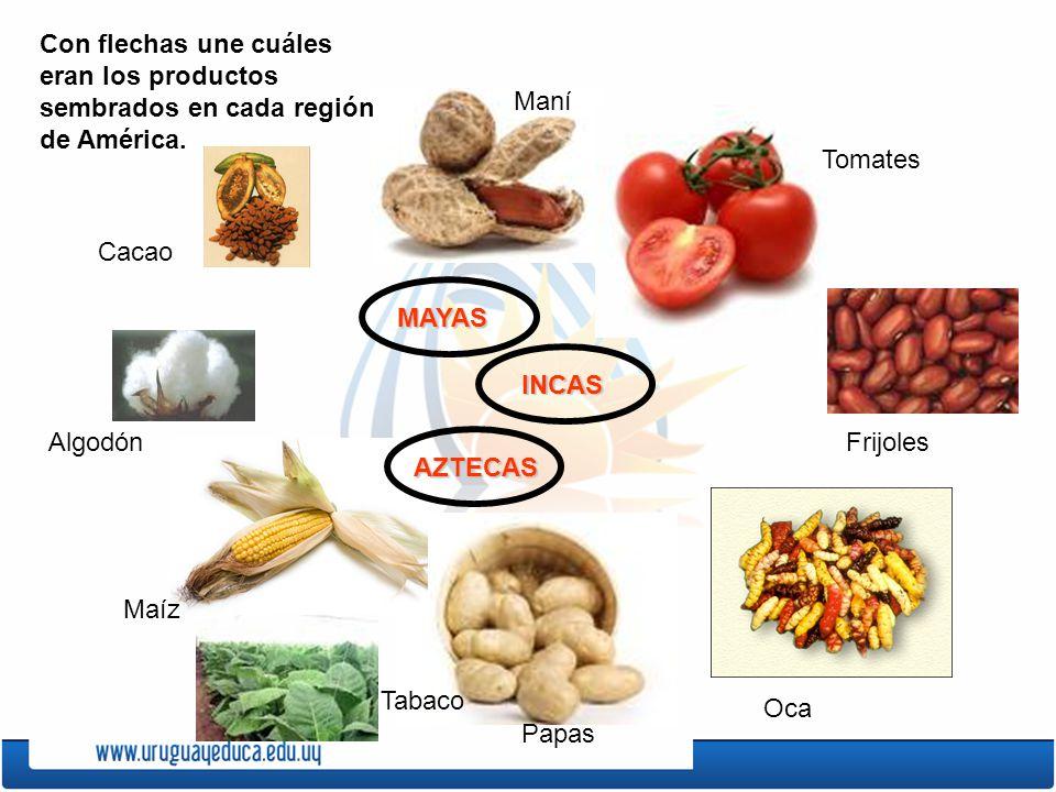 MAYAS INCAS AZTECAS Con flechas une cuáles eran los productos sembrados en cada región de América. Tabaco Papas Oca Frijoles Tomates Maní Cacao Algodó