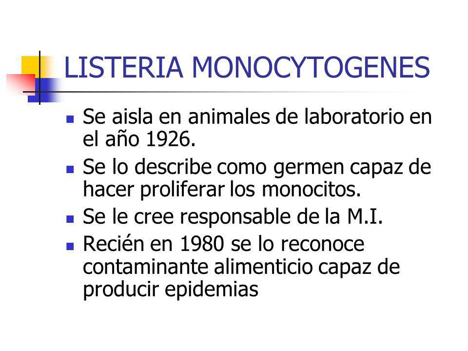 LISTERIA MONOCYTOGENES Se aisla en animales de laboratorio en el año 1926. Se lo describe como germen capaz de hacer proliferar los monocitos. Se le c