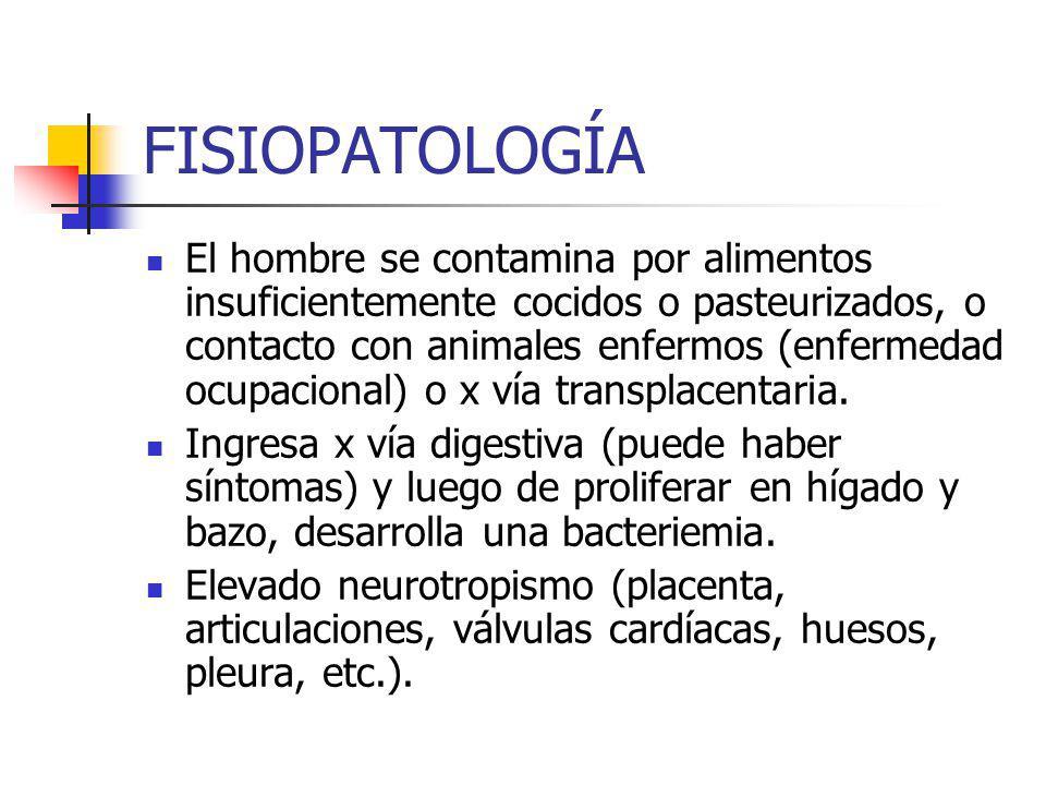FISIOPATOLOGÍA El hombre se contamina por alimentos insuficientemente cocidos o pasteurizados, o contacto con animales enfermos (enfermedad ocupacional) o x vía transplacentaria.