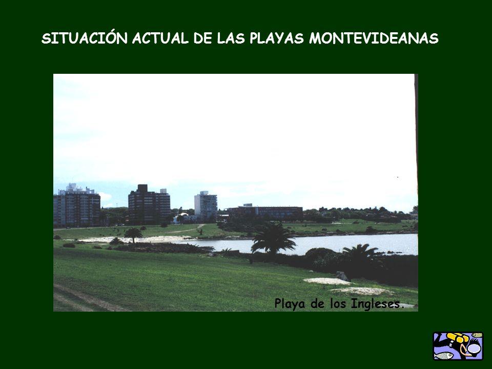 Playa Buceo SITUACIÓN ACTUAL DE LAS PLAYAS MONTEVIDEANAS Playa Malvín Playa Honda Puertito del Buceo. Playa de los Ingleses.