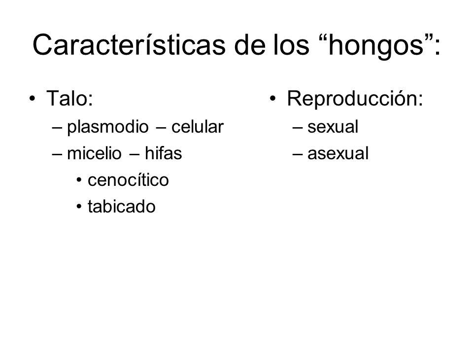 Características de los hongos: Talo: –plasmodio – celular –micelio – hifas cenocítico tabicado Reproducción: –sexual –asexual