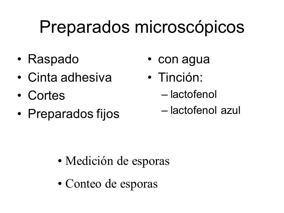 Preparados microscópicos Raspado Cinta adhesiva Cortes Preparados fijos con agua Tinción: –lactofenol –lactofenol azul Medición de esporas Conteo de esporas