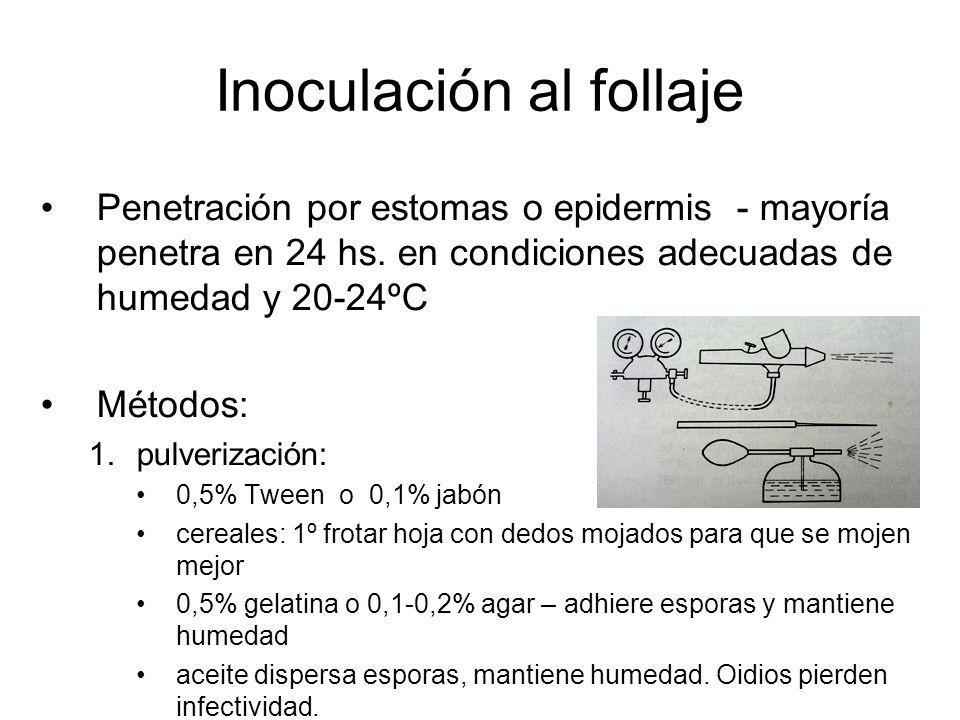 Inoculación al follaje Penetración por estomas o epidermis - mayoría penetra en 24 hs. en condiciones adecuadas de humedad y 20-24ºC Métodos: 1.pulver