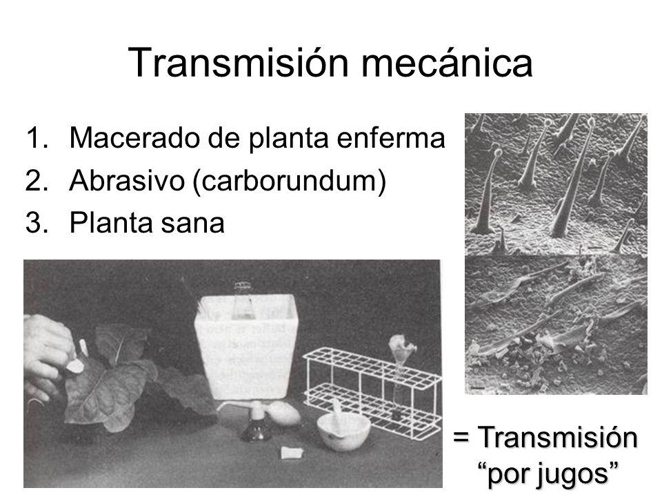 Transmisión mecánica 1.Macerado de planta enferma 2.Abrasivo (carborundum) 3.Planta sana = Transmisión por jugos
