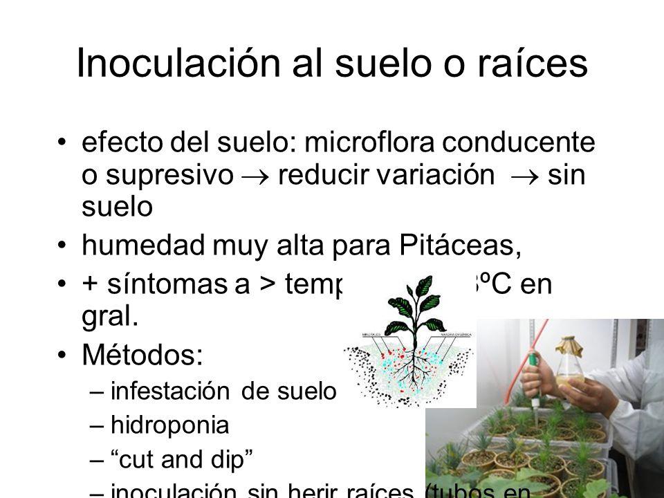 Inoculación al suelo o raíces efecto del suelo: microflora conducente o supresivo reducir variación sin suelo humedad muy alta para Pitáceas, + síntomas a > temp.
