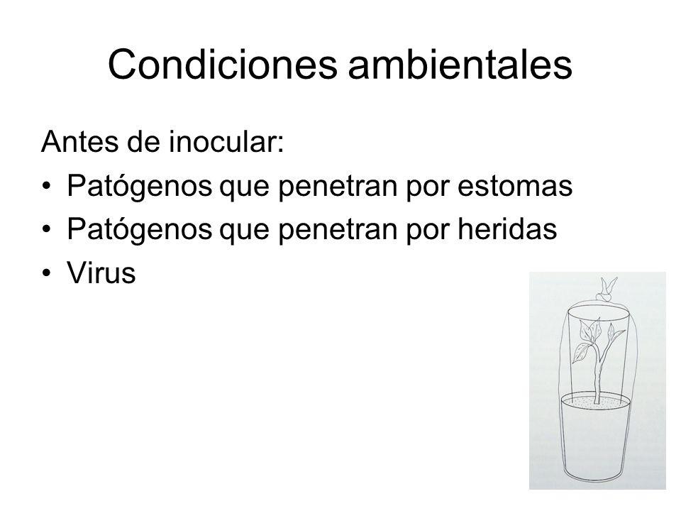 Condiciones ambientales Antes de inocular: Patógenos que penetran por estomas Patógenos que penetran por heridas Virus