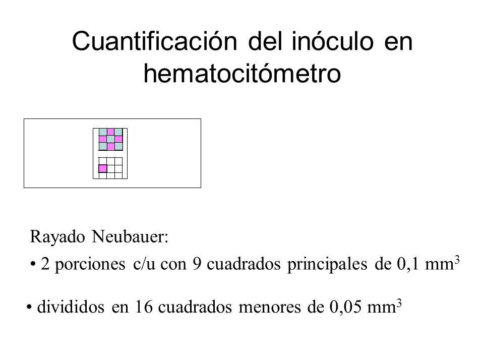 Cuantificación del inóculo en hematocitómetro Rayado Neubauer: 2 porciones c/u con 9 cuadrados principales de 0,1 mm 3 divididos en 16 cuadrados menores de 0,05 mm 3