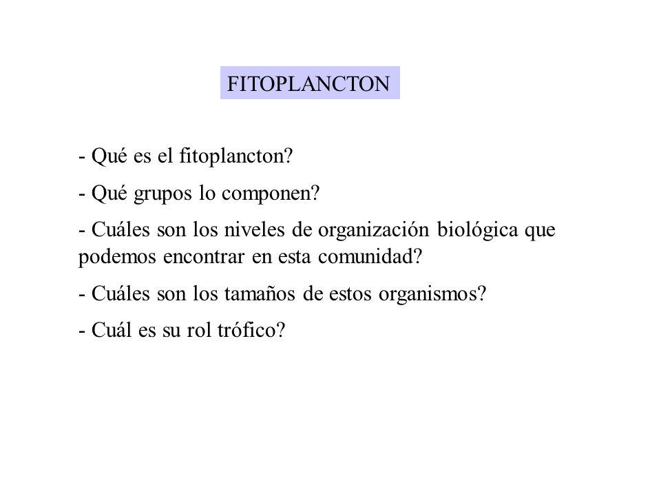 FITOPLANCTON - Qué es el fitoplancton? - Qué grupos lo componen? - Cuáles son los niveles de organización biológica que podemos encontrar en esta comu
