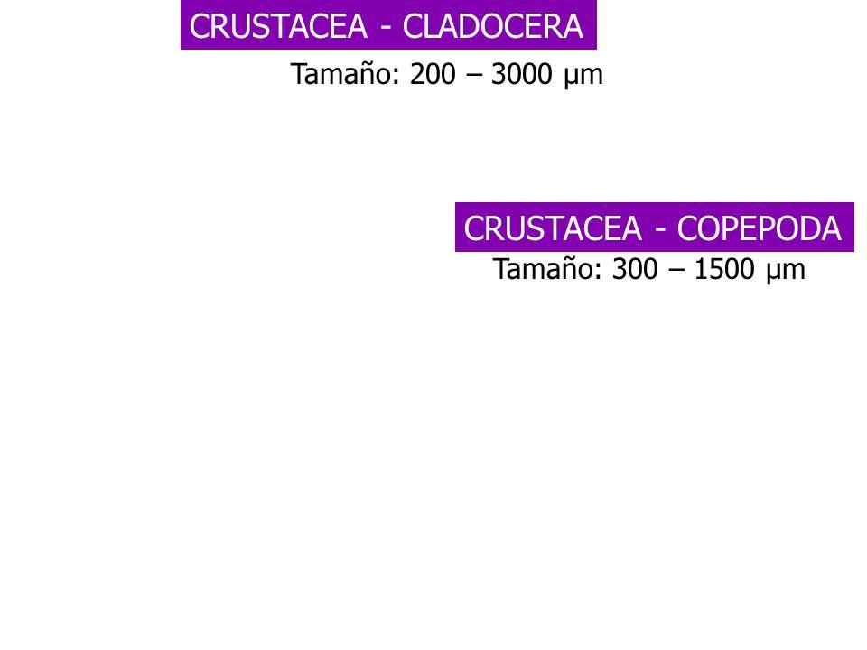 Tamaño: 200 – 3000 µm CRUSTACEA - CLADOCERA CRUSTACEA - COPEPODA Tamaño: 300 – 1500 µm